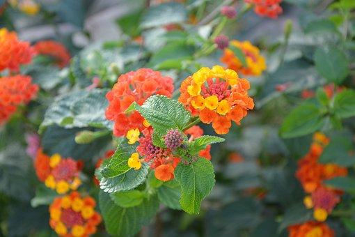 Flowers, Orange Yellow, Green Leaves, Pretty, Nature