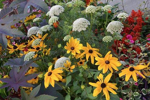 Massive Flowers, Summer, Yellow, Summer Flowers