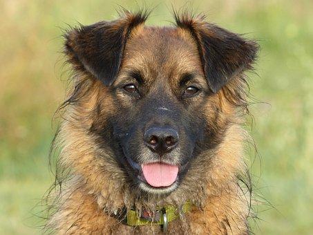 Dog, Dogs, Bitch, Brown, Sweet, Nice, Grass, Sun