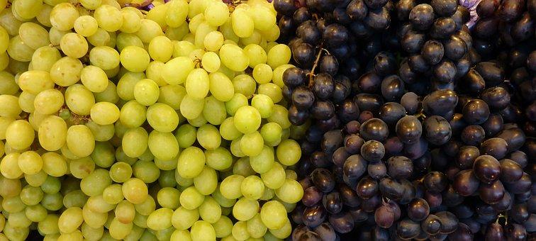 Grapes, White Grapes, Blue Grapes, Wine, Fruit, Vine
