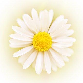 Art Flower, Art, Flower, Abstract, Creativity