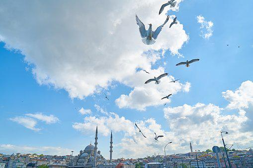 Seagull, Bird, Cami, Istanbul, Environmental, Birds