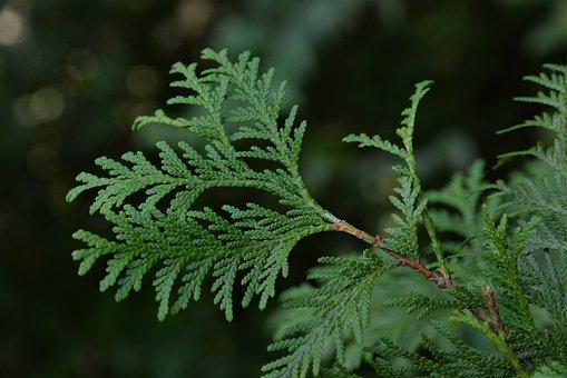 Wood, Cypress, Side Bag, Western Side Bag, Leaf