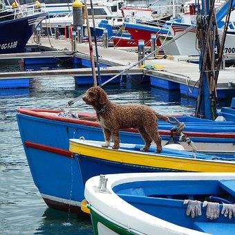Dog, Boat, Boats, Water, Pet, Lake, Summer, River