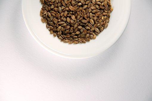 Barley, Super Barley, Drying, Health Food, White Dish