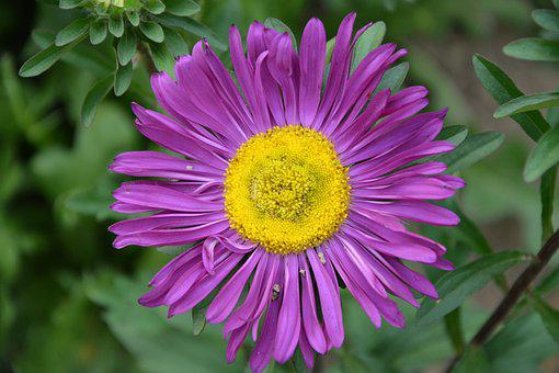 Flower, Marguerite, Purple, Bouquet, Summer Flowers