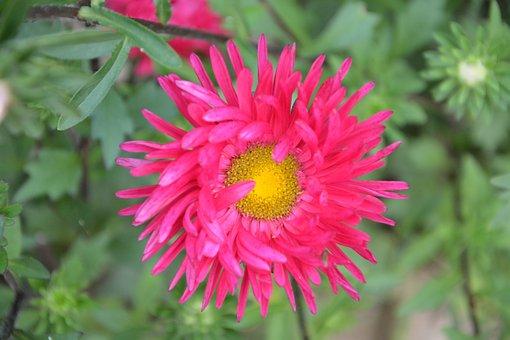 Flower, Massif, Nature, Parterre, Plant, Bouquet