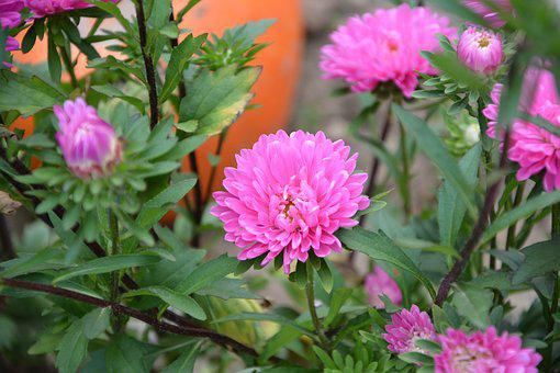 Flowers, Massif, Parterre, Garden, Summer, Nature