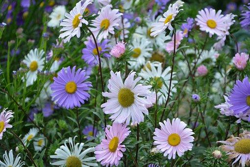 Flowers, Massif, Parterre, Bouquet, Pink Colors, White