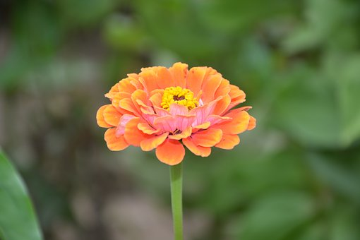 Flower, Massif, Parterre, Garden, Nature, Yellow