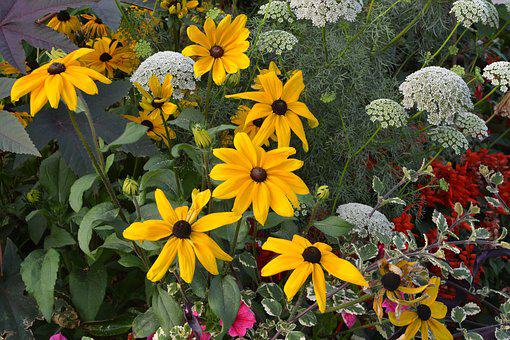 Flowers, Flowers Orange-yellow, Massif, Parterre