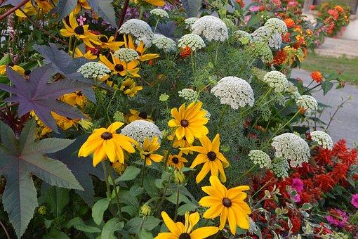 Flowers, Massif, Parterre, Nature, Summer, Plant