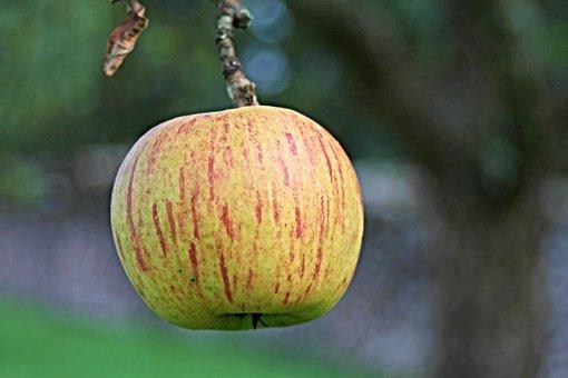 Apple, Fruit, Healthy, Autumn, Pome Fruit