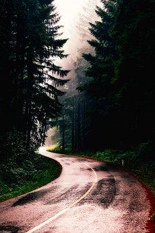 Serbia, Sunrise, Morning, Fog, Landscape, Road, Forest