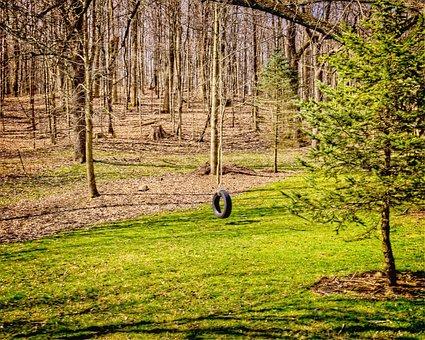 Tire, Tire Swing, Scenery, Trees, Artistic, Art Print