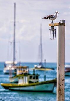 Ship, Bird, Boat, Pier, Water, Sky, Litoral, Mar, Trip
