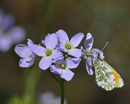 Butterfly, Orange, Tip, Wildlife, Lepidoptera
