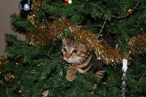 Cat, Christmas, Tree, Pussycat, Domestic, Pet, Animal