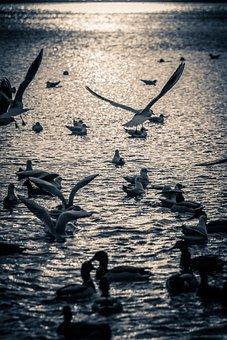 Birds, Bird, Animal, Nature, Lake, Flight, Pen