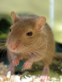 Pet Shop, Adorable, Animals, Beige, Brown, Cage, Claws