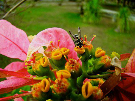 Color, Red, Green, Yellow, Black, Flower, Bug, Insect