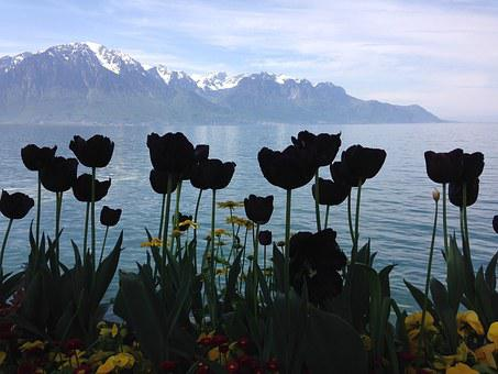 Black Tulips, Silhouettes, Lake, Alps, Montreux