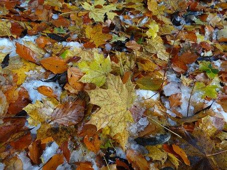 Leaves, Fall Foliage, Leaf, Brown, Autumn, Fall Color
