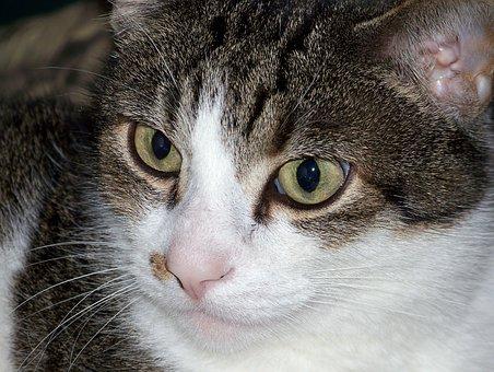 Cat, Kitty, Feline, Kitten, Pet, Animal, Domestic