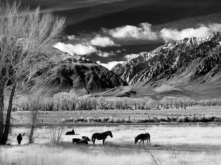 Horses, Horse Pasture, Pasture, Graze, Coupling, Nature