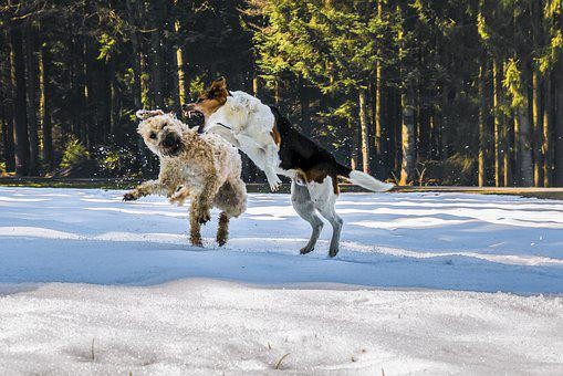 Dogs, Fight, Play, Snow, Wallpaper, Wallpaper Dogs, Pet