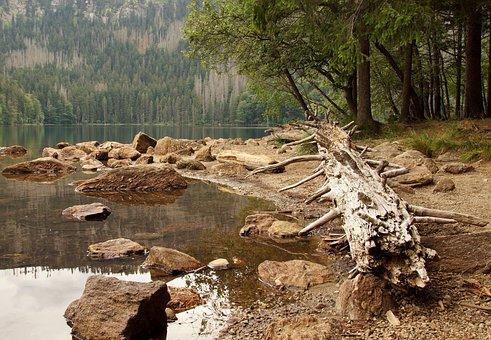 Black Lake, Lake, Water, šumava, Nature, Forest, Trees