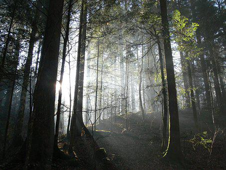 Forest, Light, Switzerland, Nature, Landscape, Green