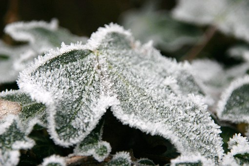 Frost, Leaf, Nature, Winter, Cold, Ice, Season, Snow