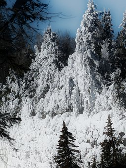 Canim Falls, British Columbia, Canada, Frosted, Tree