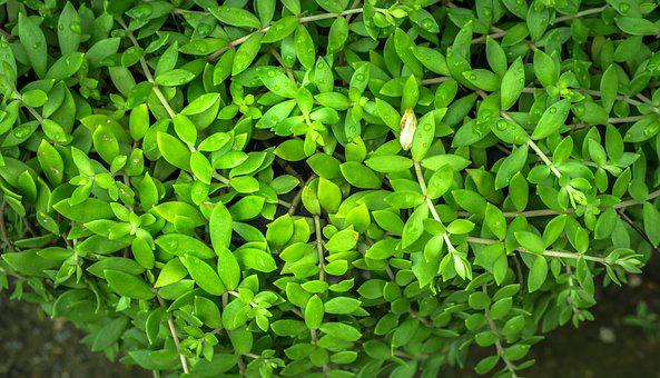 The Leaves, Plants, Nature, Green, Abstract
