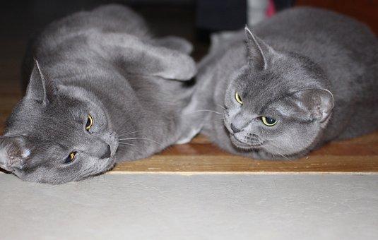 Cat, Pet, Domestic, Feline, Fur, Hair, Rescue, Young