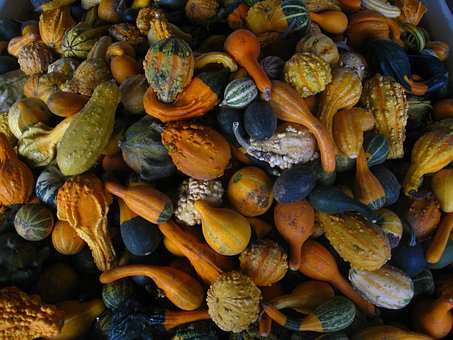 Gourds, Fall, Autumn, Thanksgiving, Orange, Halloween