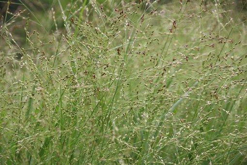 Grass, On The Vine, Halme, Blades Of Grass
