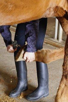 Horse, Care, Huf, Hoof Care, Reiterhof, Horse Hoof
