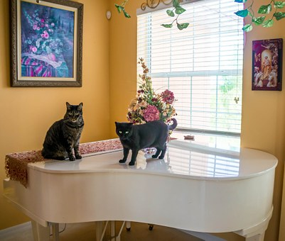 Cats, Piano, Interior, Domestic, White, Indoors