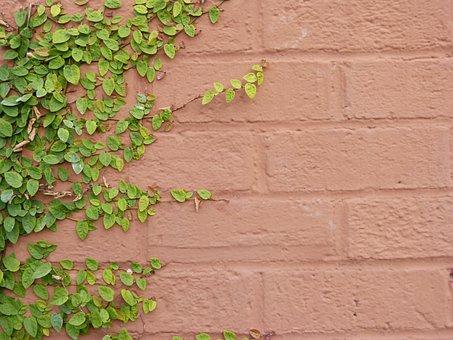Ivy, Ivy On Wall, Brick Wall, Painted Brick Wall
