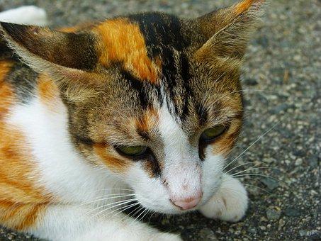 Cat, Feline, Animal, Kitten, Domestic, Mammal, Kitty