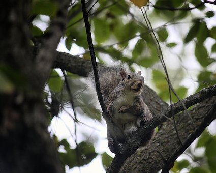 Squirrel, Tree, Animal, Nature, Mammal, Wild, Wildlife