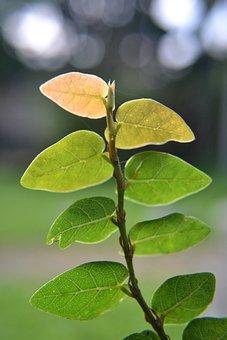 Leaves, Vines, Dry Area Plants, Plants On Wall, Nature