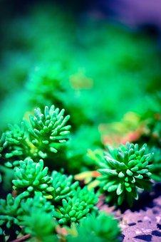 Grass, Green, Green Grass, Nature, Plant, Meadow