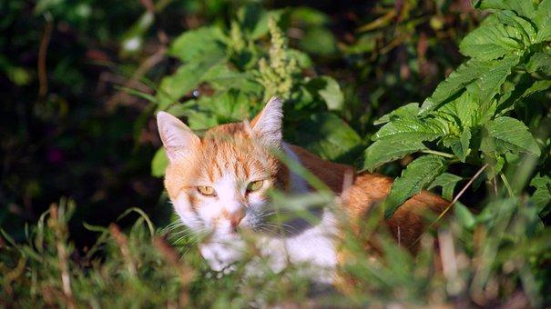 Cat, Animal, Pet, Feline, Kitten, Domestic, Kitty