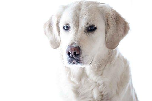 Pet Photography, Dog, Animal, Nature, Fun, Comrade