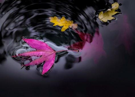 Water, Pond, Leaves, Colorful, Oak, Maple, Floating
