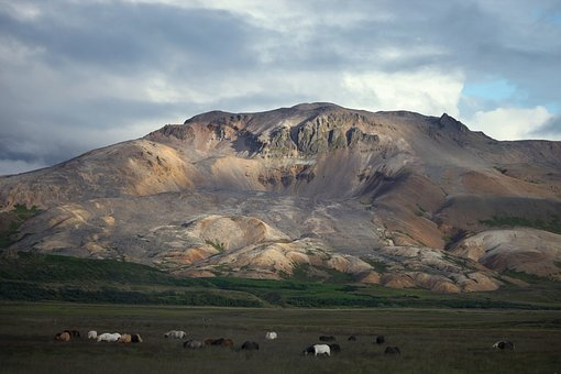 Mountain, Field, Horses, Showers, Nature, Iceland