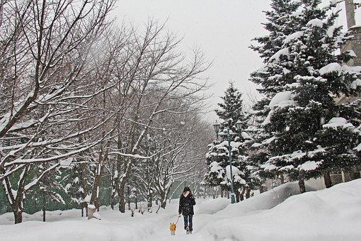 Winter, Snow, Beautiful, Park, Tree, Morning